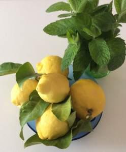 menta e limoni